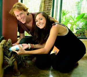 Temporary Tiger 'Rents