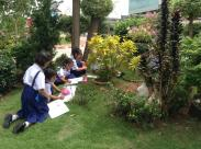 Drawing plants outside